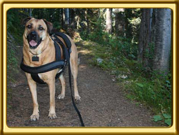 Ebbey the Canine Actor poses in the forest last summer.